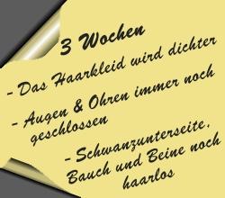 postit-3wochen