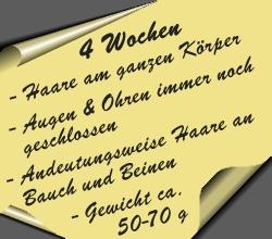 postit-4wochen