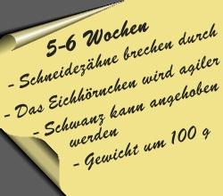 postit-5bis6wochen