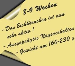 postit-8bis9wochen