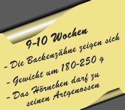 postit-9bis10wochen